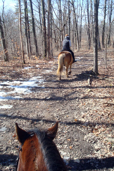 Trail ride on horseback