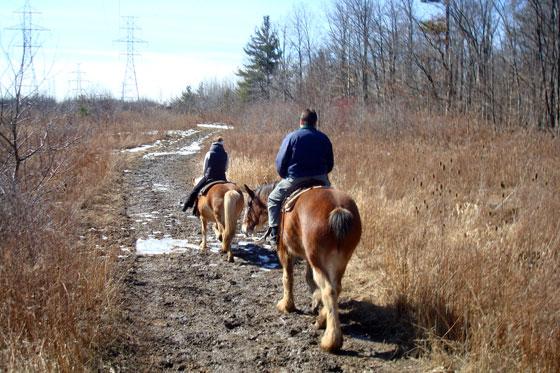 Trail ride on horseback