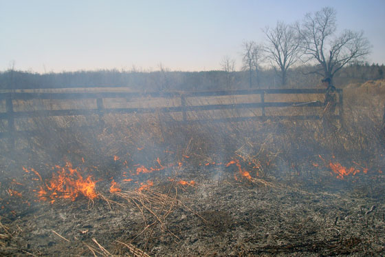 Burning weeds