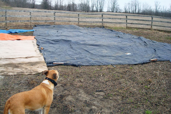Tarps on the garden