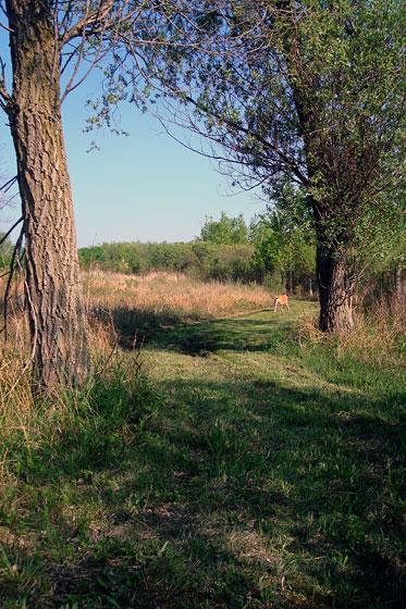 Baxter walking along the pond trail