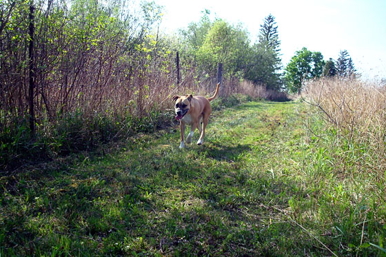 Baxter walking along the pond trail