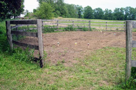 Seeded garden