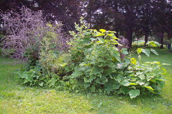 Overgrown clump of weeds