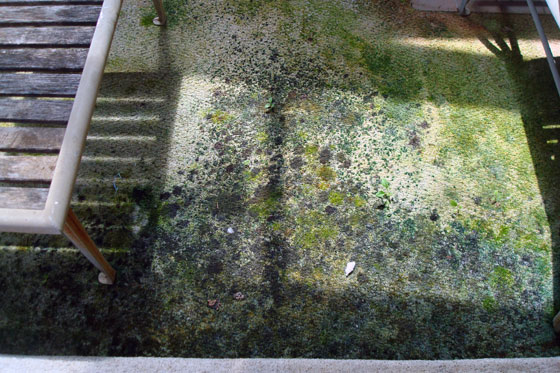 Moss growing inside the sunroom
