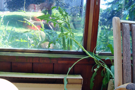 Weeds growing inside the sunroom