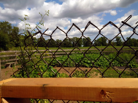 Chainlink fence over the top of the garden gate
