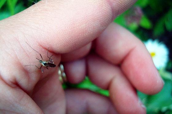 Mosquito biting my hand