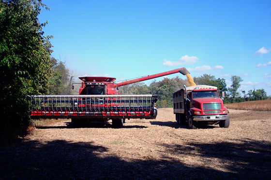 Combine loading soybeans into a dump truck