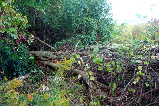 Downed tree at the edge of the field