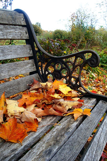 Fall leaves on a wood bench