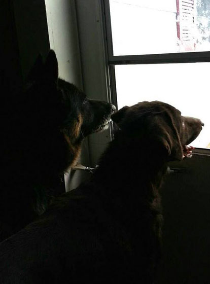Treu and Brody looking out the window