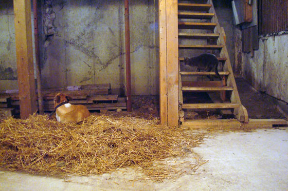 Stand off over the pile of straw