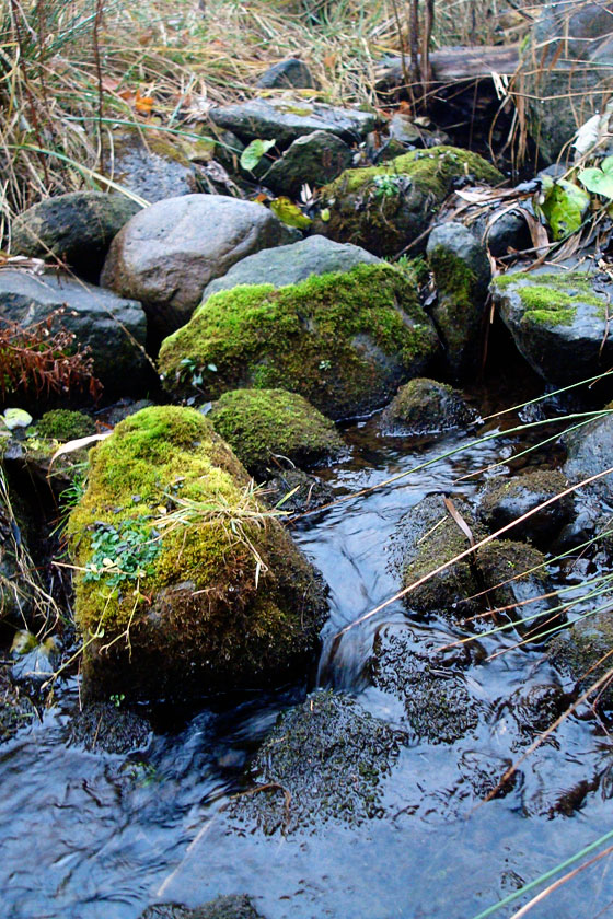 Creek running over mossy stones