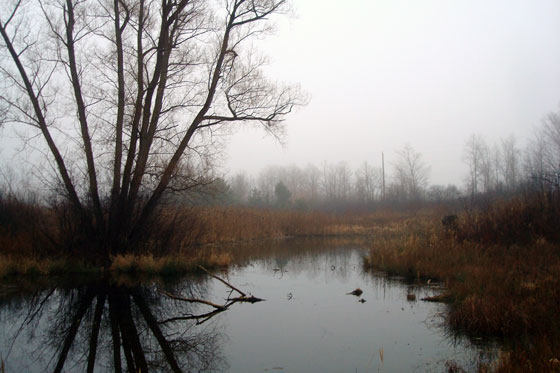 Pond on a foggy fall afternoon