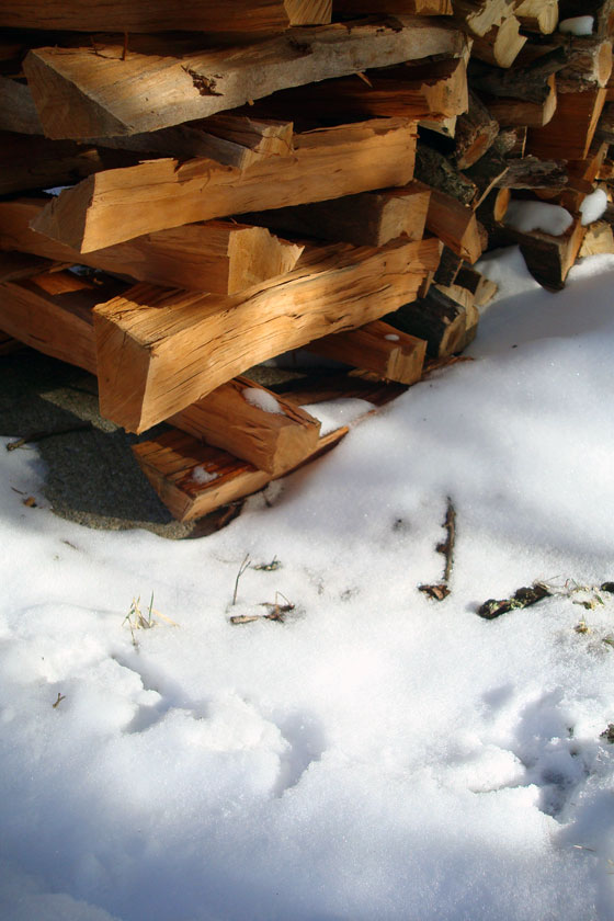 Turkey tracks around the woodpile