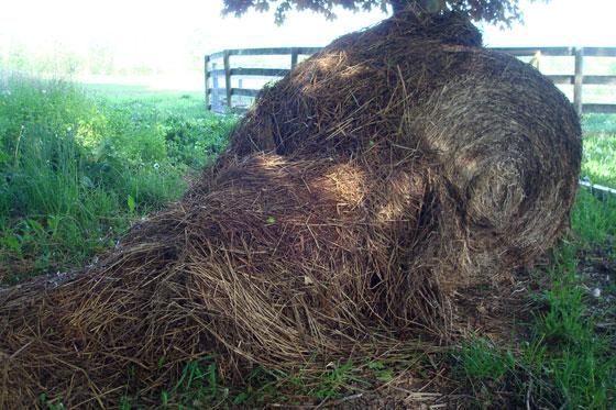 Straw bale for mulching the garden