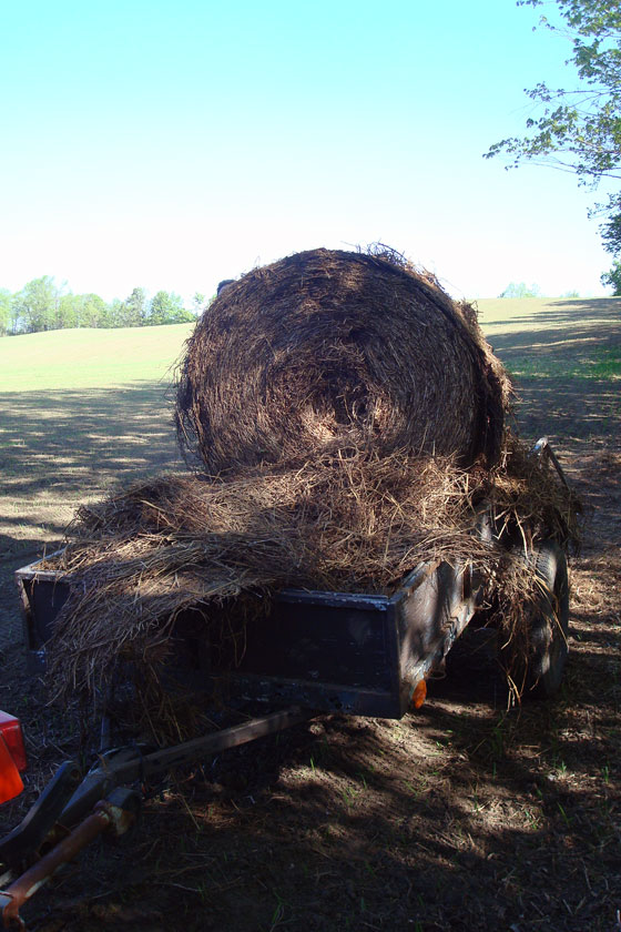 Straw bale in the trailer