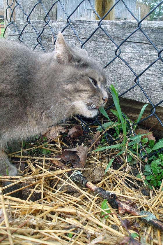 Ralph in the garden