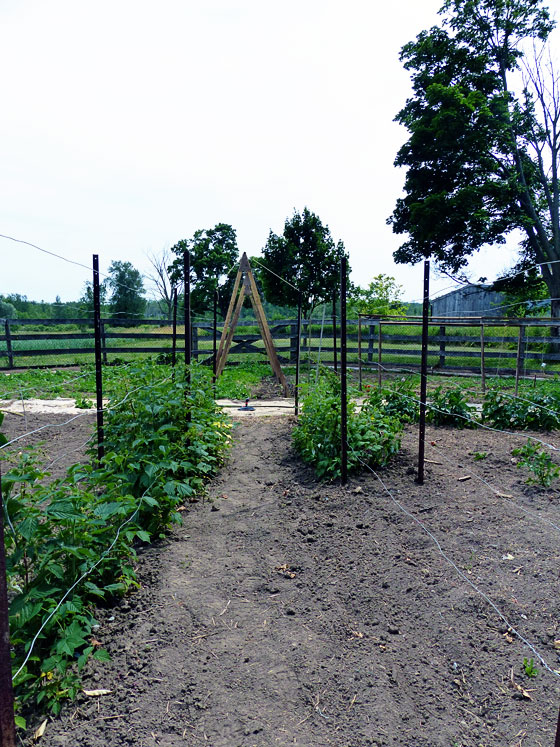 Centre axis of a round vegetable garden