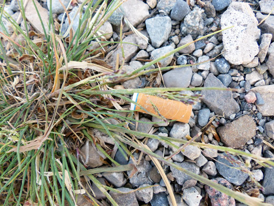 Cigarette butt on the side of the road