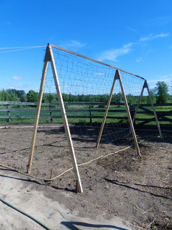 A-frame squash trellis