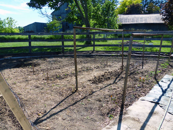 Simple wood 2x2 tomato trellis