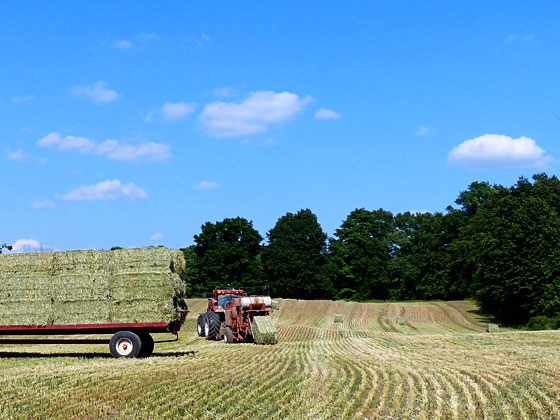 Baler behind the hay wagon