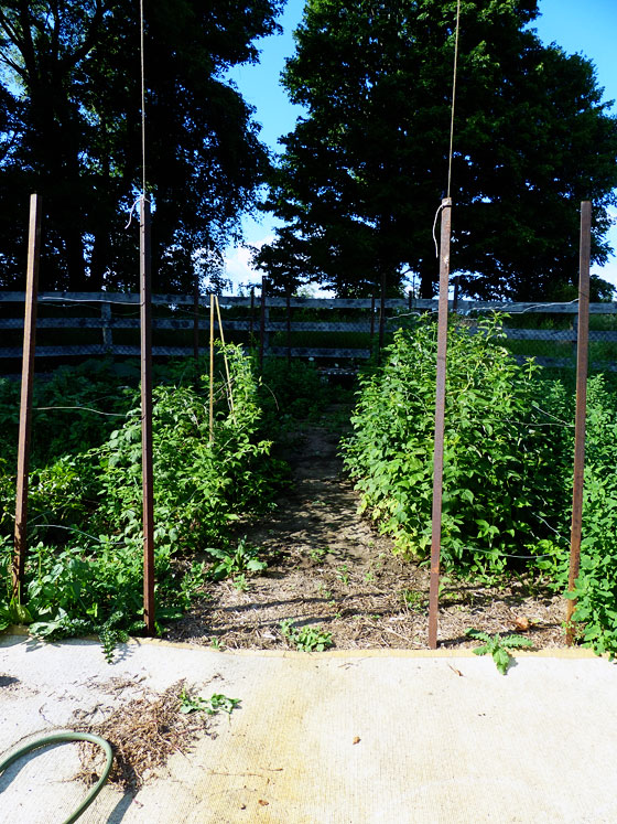 How to build a raspberry trellis