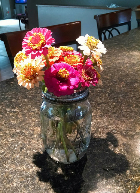 Zinnias in a mason jar