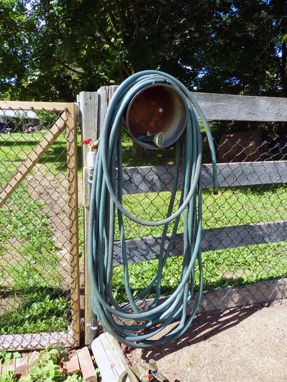 Hose in the vegetable garden