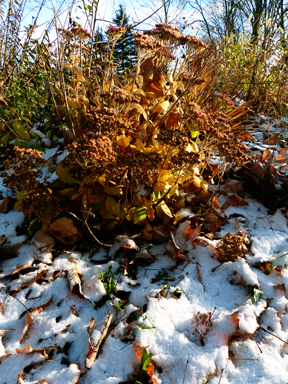 Snow on fallen leaves