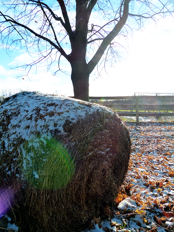 Snow on a round hay bale