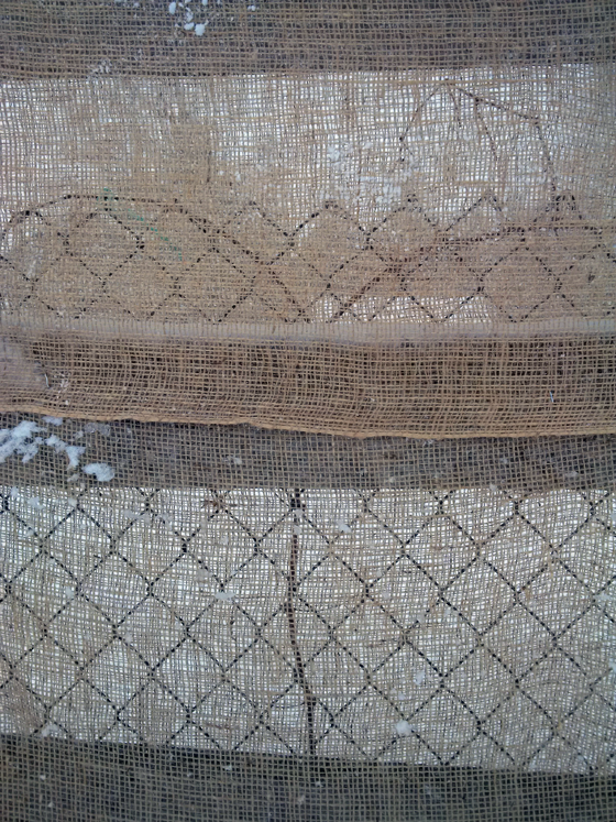 Wrapping grape vines in burlap