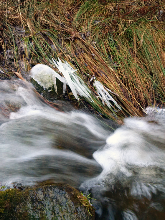 Fast flowing water in the creek