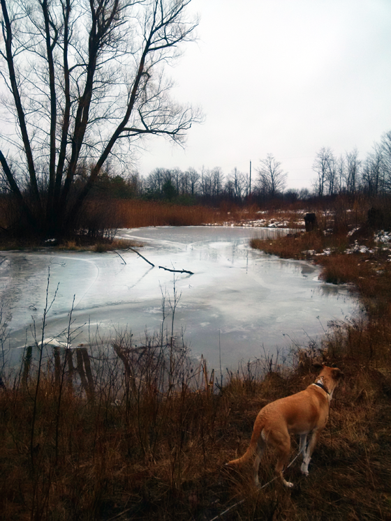 Pond during a January thaw