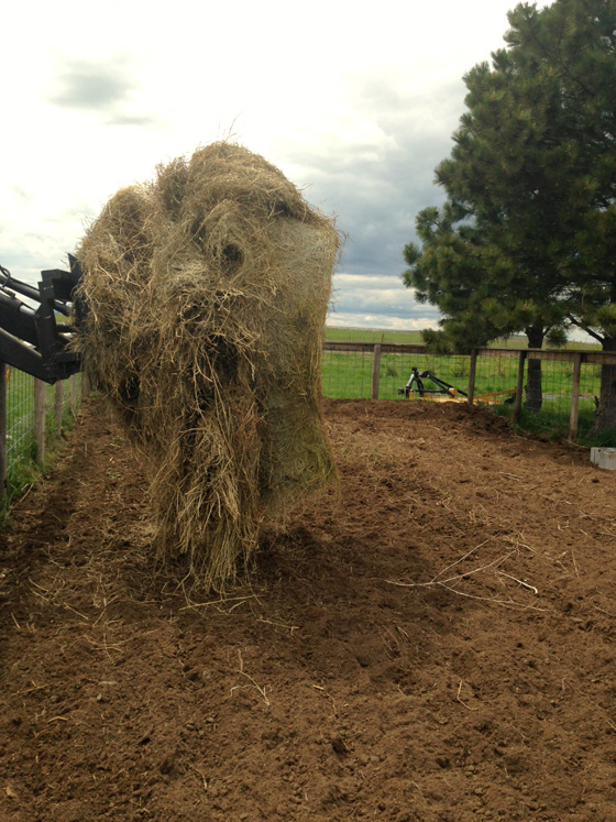 Hay mulch in the garden from The Prairie Homestead