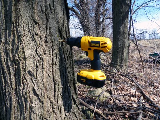 Drill stuck in a tree