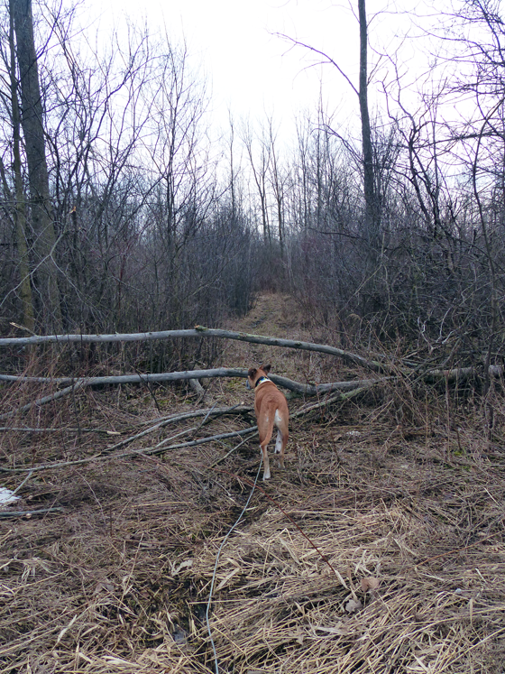 Fallen tree across the trail