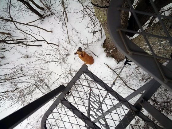 Looking down from the deer stand at Baxter on the ground
