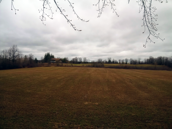 Field at the beginning of April
