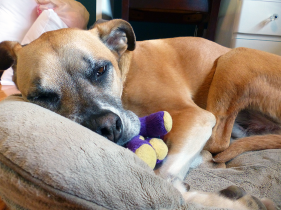 Baxter dozing