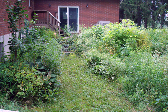 Overgrown weeds at the back of the house