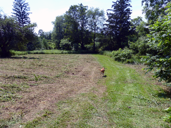 Baxter running through the meadow