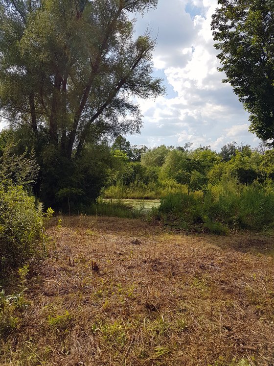 Clearing overgrown brush on the shore of the pond