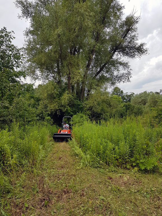 Mowing the overgrown grass around the pond
