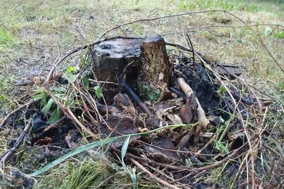 Burning a stump