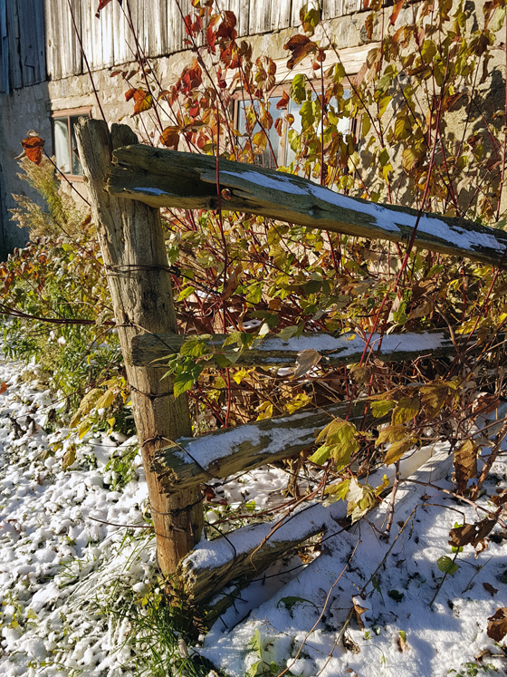 Snow dusting the split rail fence by the barn