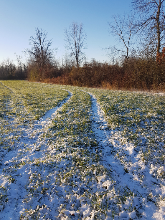 Tire tracks across the field after the first snowfall
