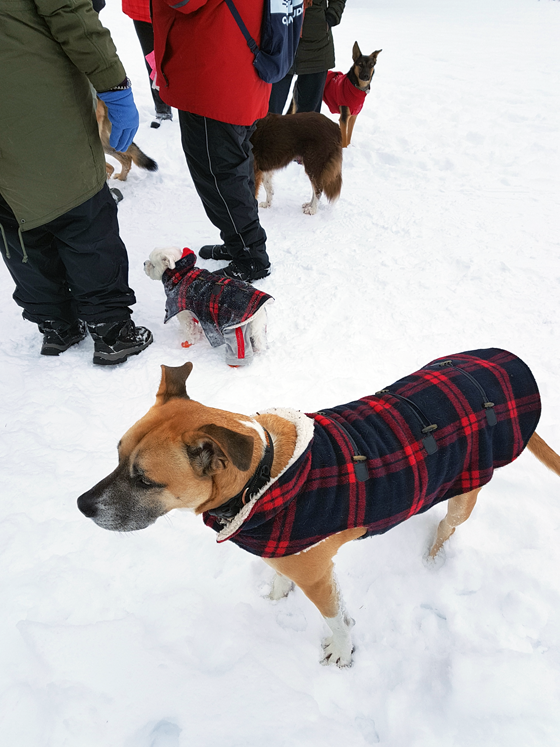 Dogs in matching plaid coats